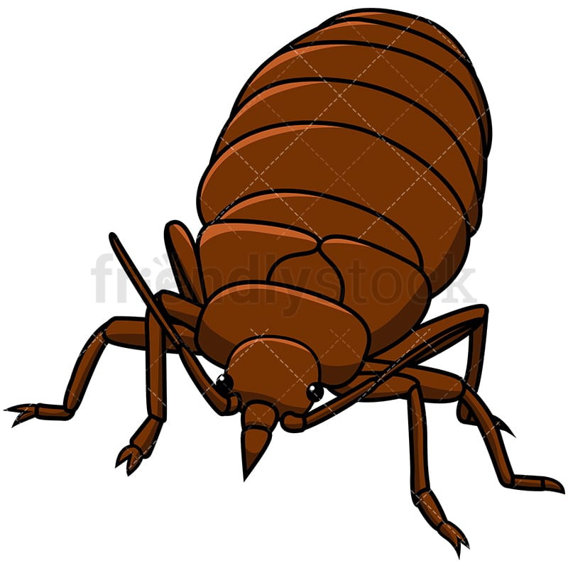 Bed Bug Front View Cartoon Vector Clipart Friendlystock