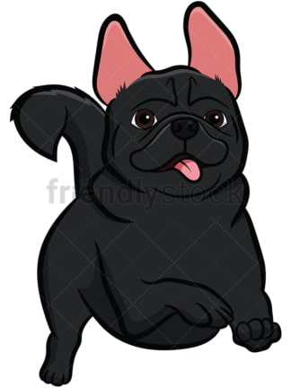 Black pug dog running. PNG - JPG and vector EPS file formats (infinitely scalable). Image isolated on transparent background.
