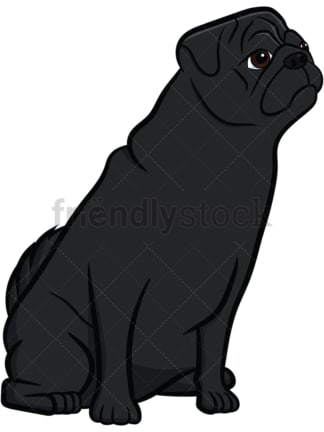Black pug dog sitting on hind legs. PNG - JPG and vector EPS file formats (infinitely scalable). Image isolated on transparent background.