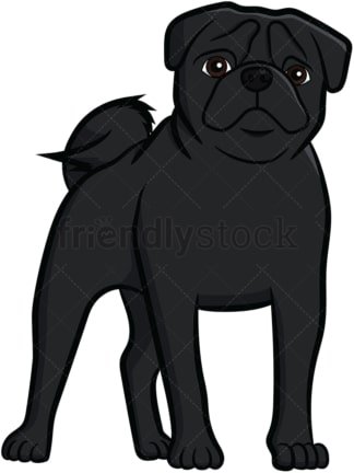 Black pug dog standing. PNG - JPG and vector EPS file formats (infinitely scalable). Image isolated on transparent background.
