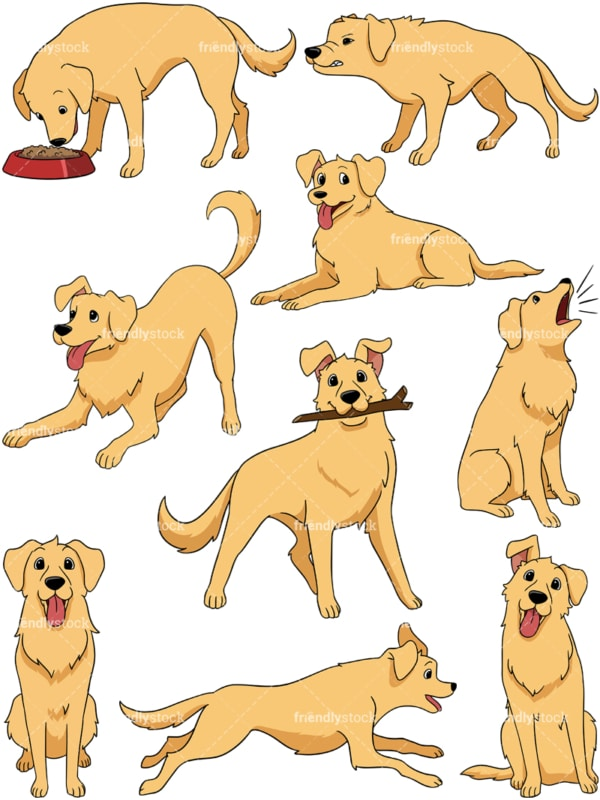 Golden retriever. PNG - JPG and vector EPS file formats (infinitely scalable). Image isolated on transparent background.
