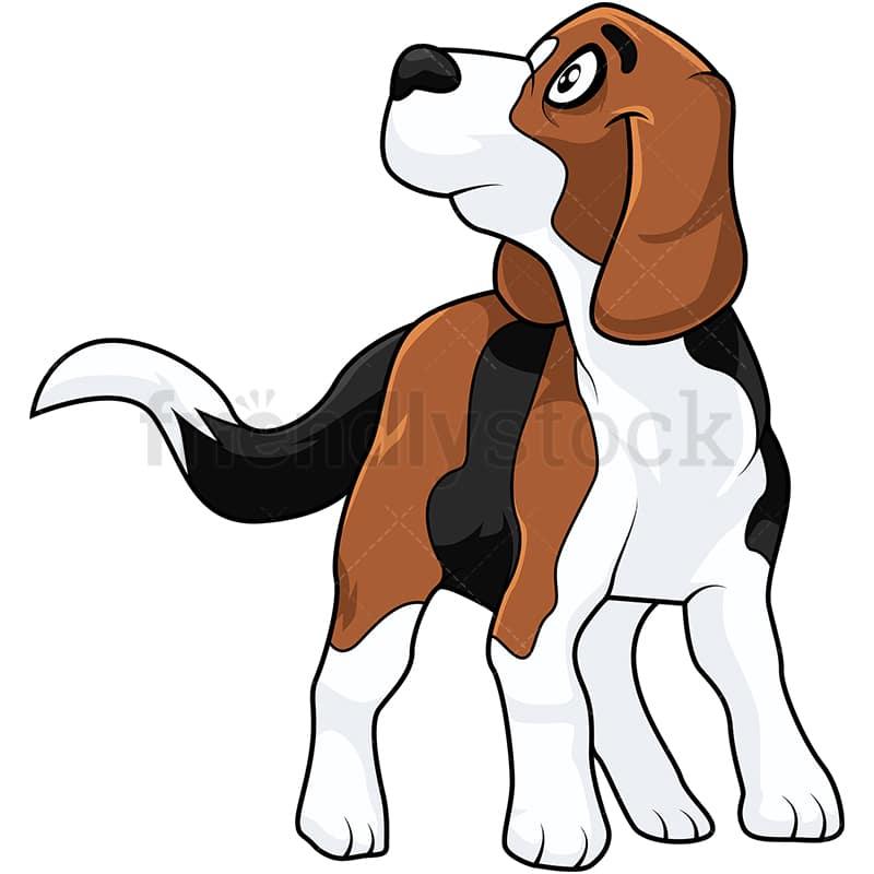 Christmas Beagle Clipart.A Cute Beagle Dog Looking Up At Its Owner
