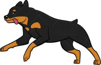 Active rottweiler running. PNG - JPG and vector EPS (infinitely scalable).
