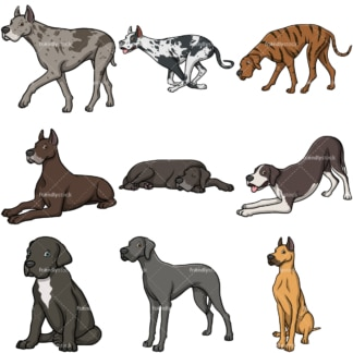 Great dane dogs. PNG - JPG and vector EPS file formats (infinitely scalable).