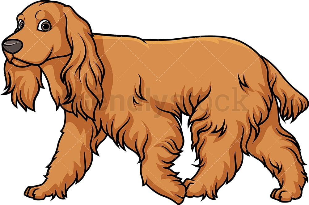 English Cocker Spaniel Walking Cartoon Clipart Vector Friendlystock