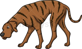 Brindle great dane sniffing. PNG - JPG and vector EPS (infinitely scalable).